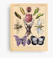 Bug Plate Canvas Print