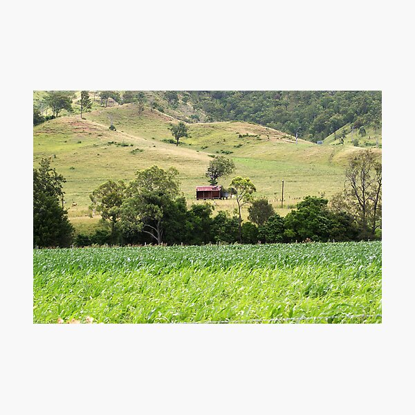 Country Meadows Photographic Print