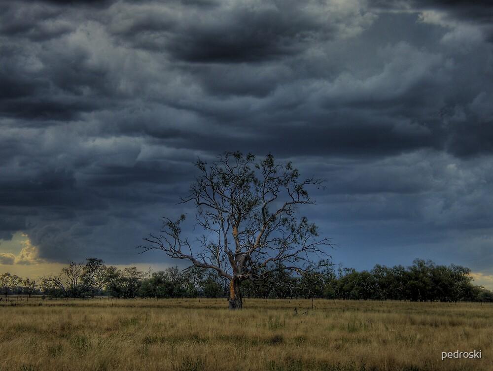 Wilber Storm 001 by pedroski