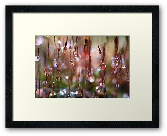 Rain Catcher by Sharon Johnstone
