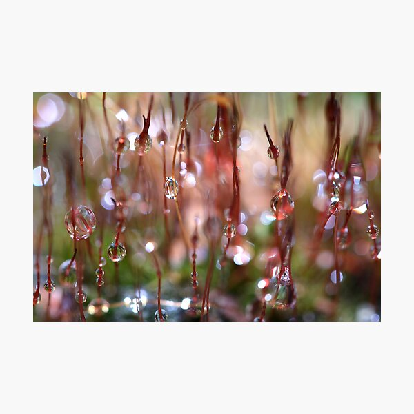 Rain Catcher Photographic Print