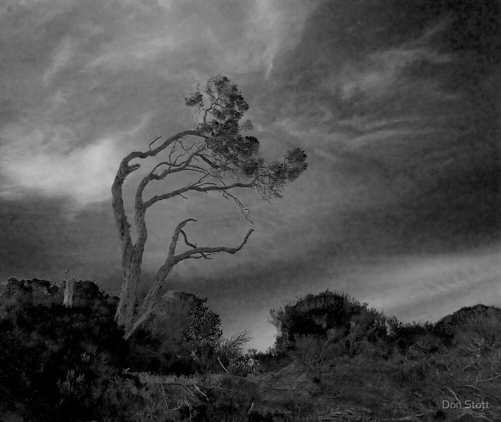 Tree Storm by Don Stott