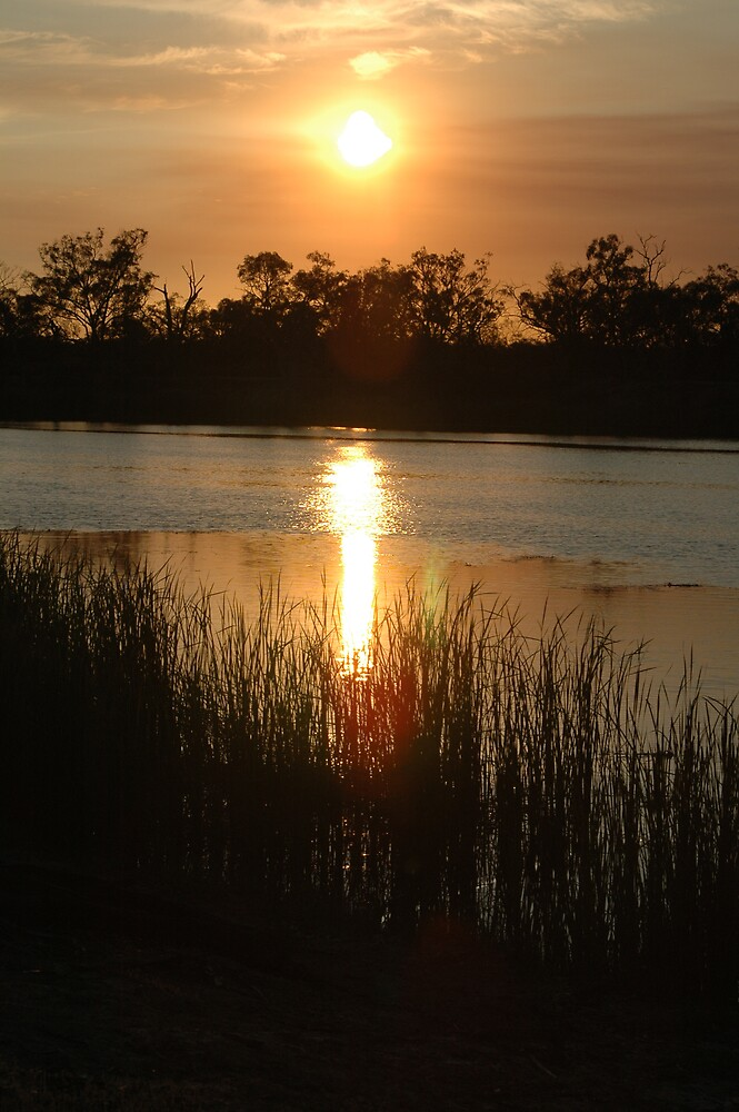 Good Night Murray River by Donnabug