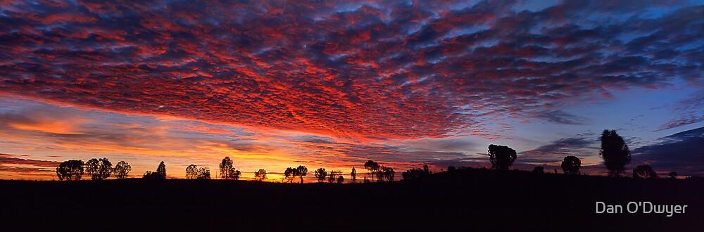 Desert Sunrise by Dan O'Dwyer
