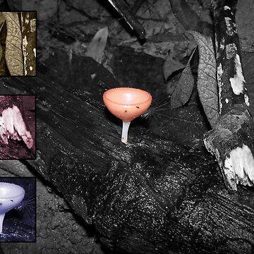 Fungus by Joeltee