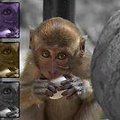 Baby Monkey by Joeltee