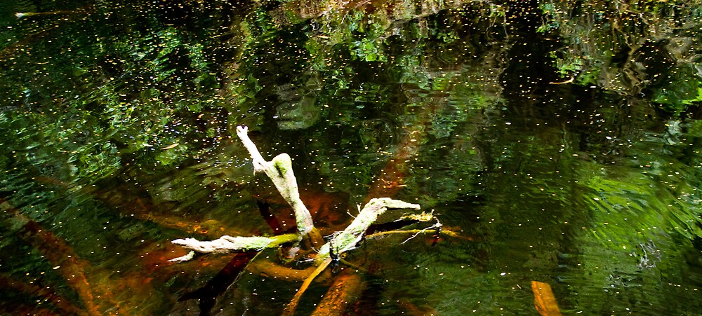 Reflections by Igor Janicijevic