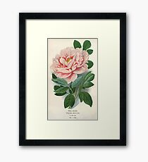 Lámina enmarcada Favourite flowers of garden and greenhouse Edward Step 1896 1897 Volume 1 0003 Tree Peony