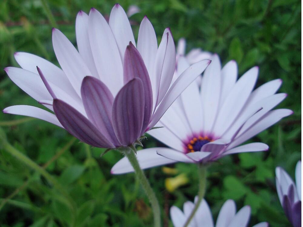 Wildflowers by presbi