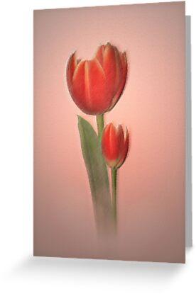 Tulips in light by Dawnsky2