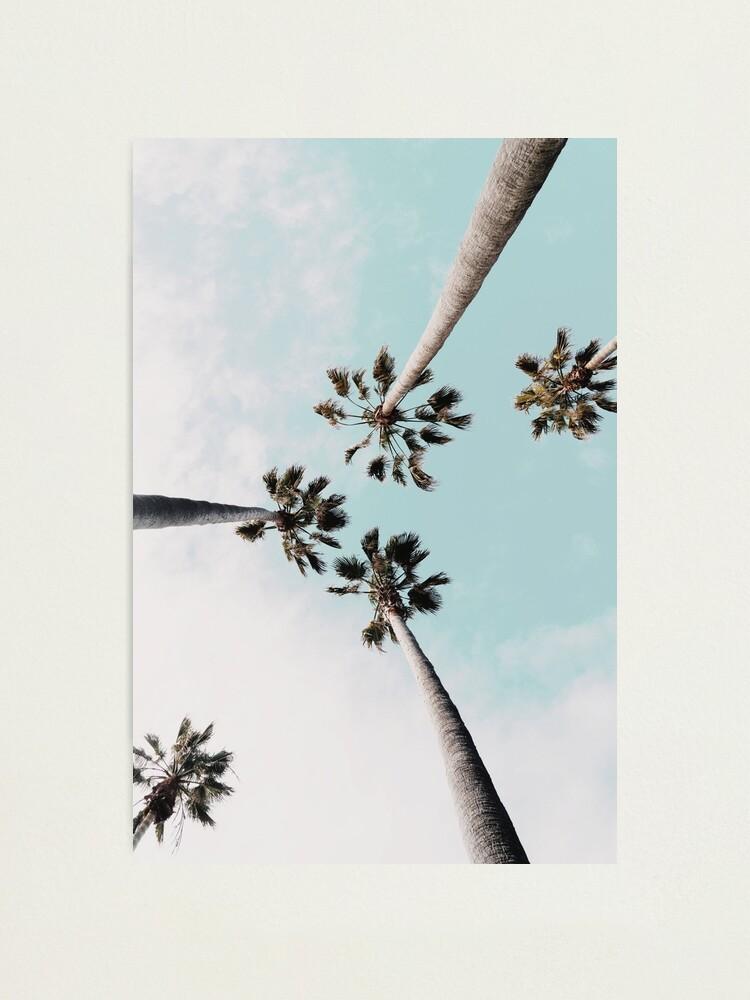 Alternate view of Palm trees Palms print Photographic Print