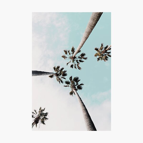 Palm trees Palms print Photographic Print