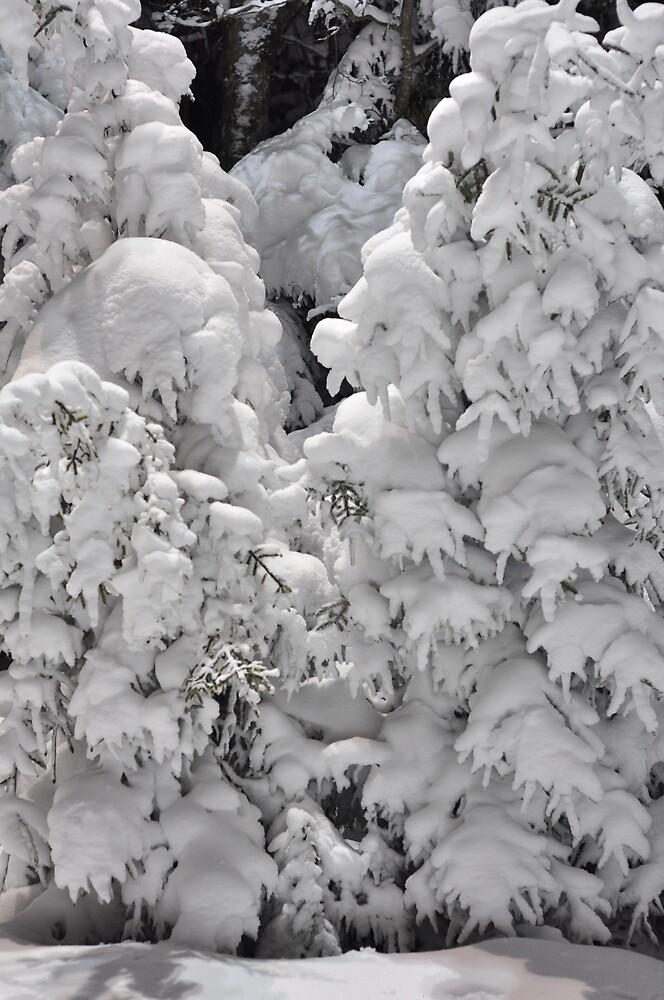 winter by ALEX GRICHENKO