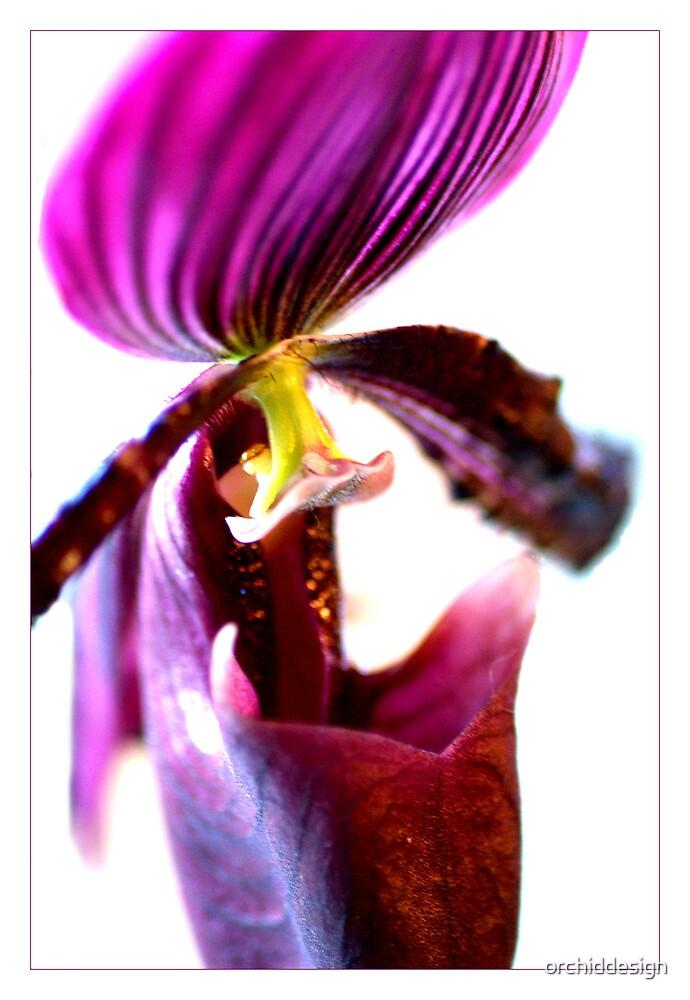 Purple Paphiopedilum by orchiddesign
