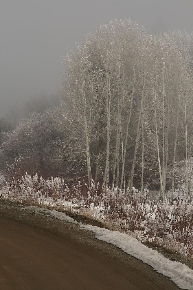 Olalla frost by Larry  Stewart