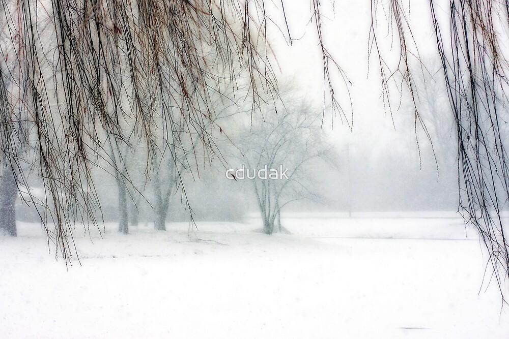 VERY COLD WINTER'S DAY  by cdudak