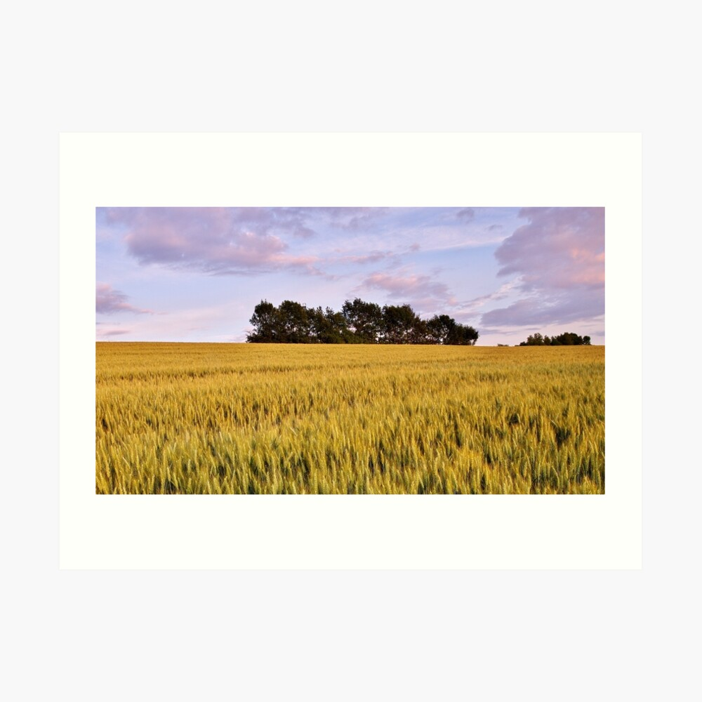 Wheat field at dusk Art Print