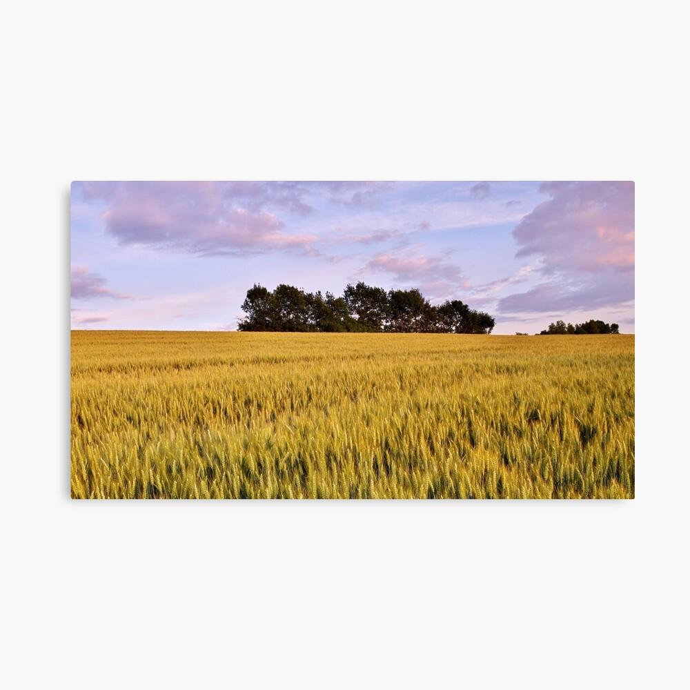 Wheat field at dusk Canvas Print