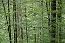 Trees, branches and foliage in Valserine forest by Patrick Morand