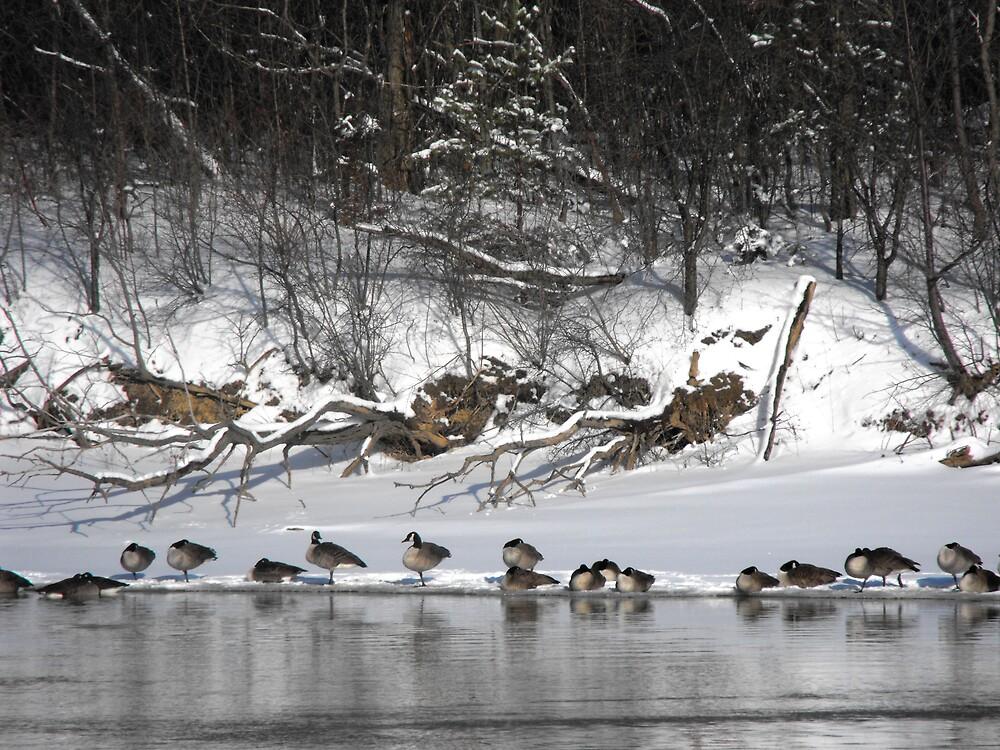 Riverside Geese by ArianaMurphy