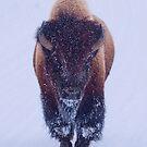 Bison, der durch den Schnee in Nationalpark Yellowstone sich bewegt von OLena  Art ❣️