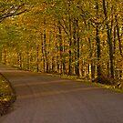 Autumn Road by Lars Klottrup