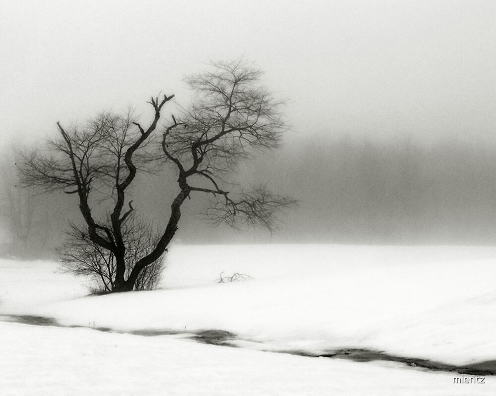 Solitary Tree by mlentz