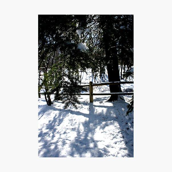 It's Winter Photographic Print