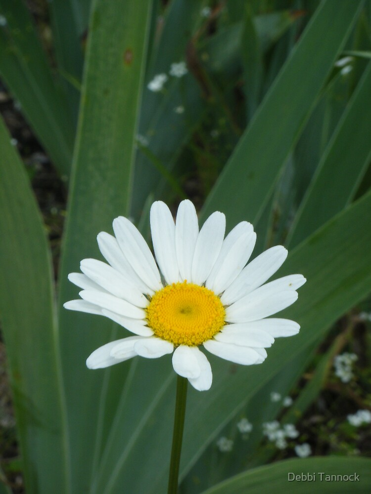 Miss Daisy Sunshine by Debbi Tannock