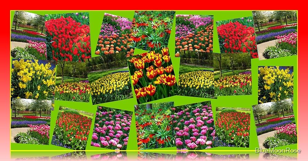 Postkarten aus Holland - Dutch Bulbs von BlueMoonRose
