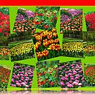 Postkarten aus Holland - Dutch Bulbs von BlueMoonRose