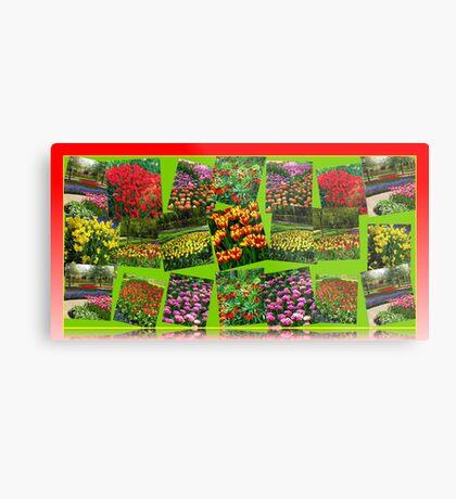 Postkarten aus Holland - Dutch Bulbs Metallbild