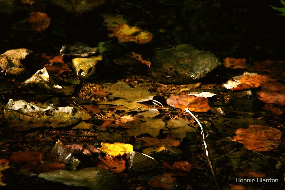 Autumn by Bonnie Blanton