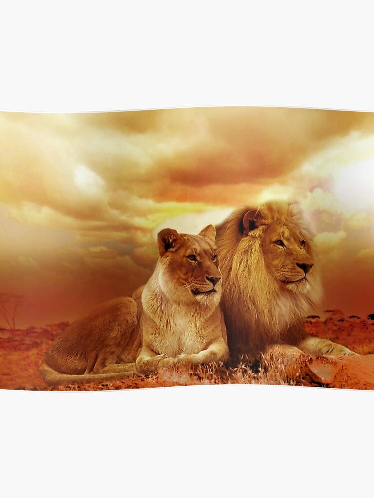 Löwe und löwin bild. ⭐ Raubkatzen. 2019 11 04