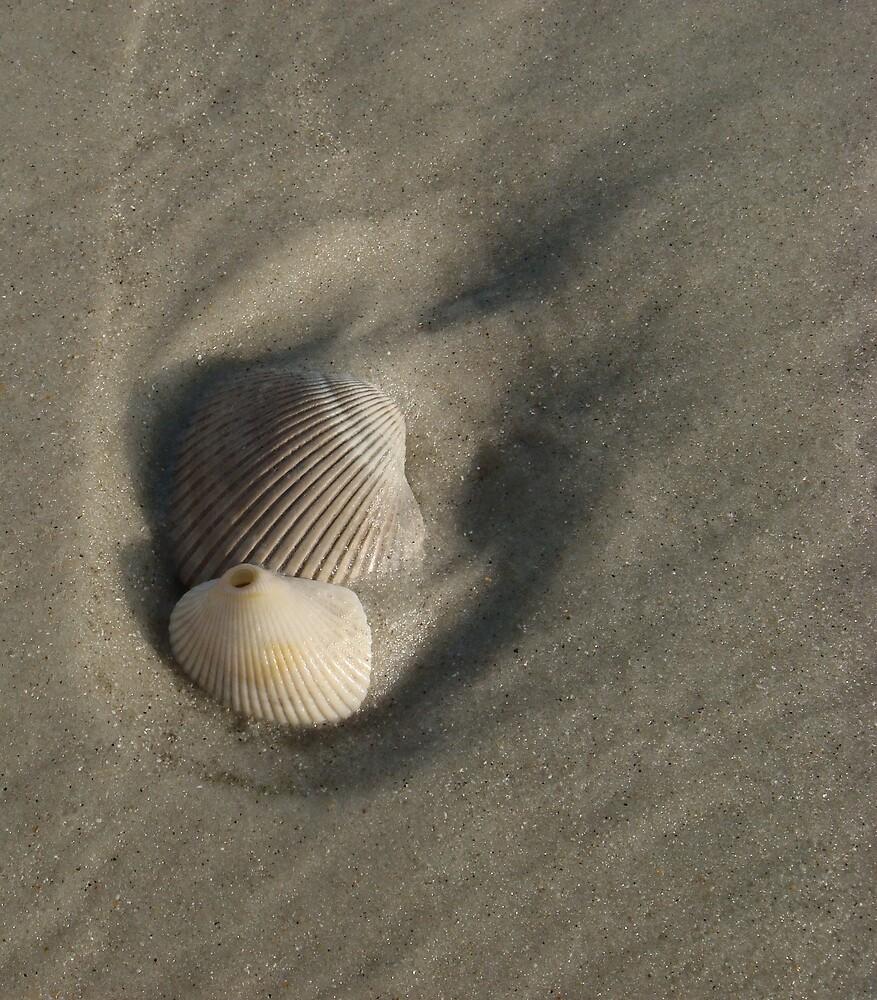 shells by cynthia  brown