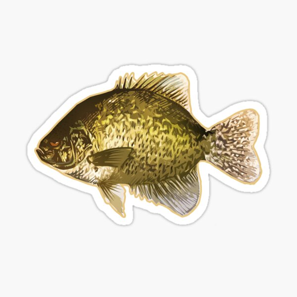 Crappie Fish Sticker