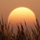 Sunset by FrankThomas
