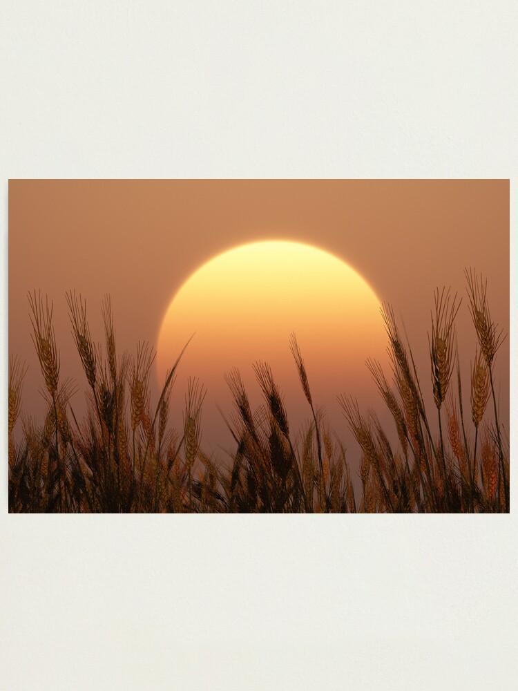 Alternate view of Sunset Photographic Print