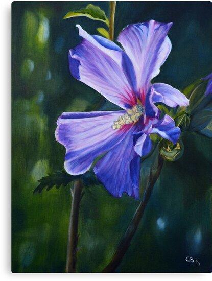 « Fleur d'hibiscus » par cindybarillet