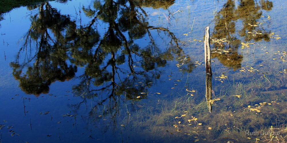 Afternoon Reflections - Lake St Clair - Tasmania by Ruth Durose