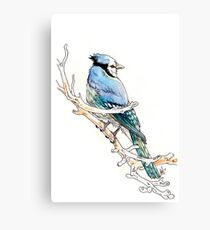 Blue Jay on Icy Branch Canvas Print