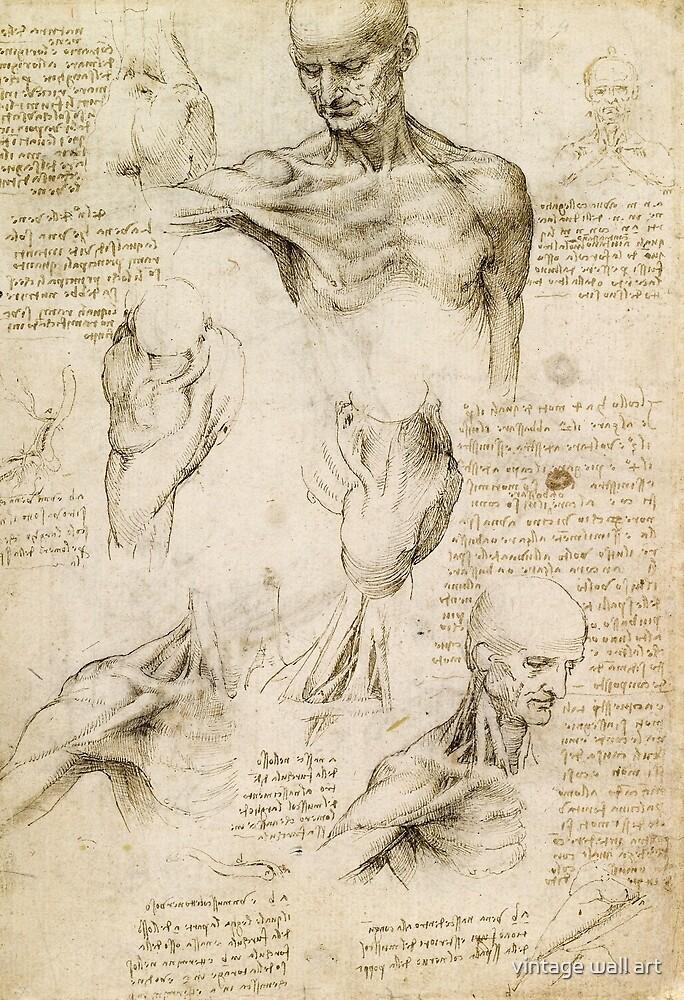 Leonardo Da Vinci Anatomy Drawing By Fineearth Redbubble