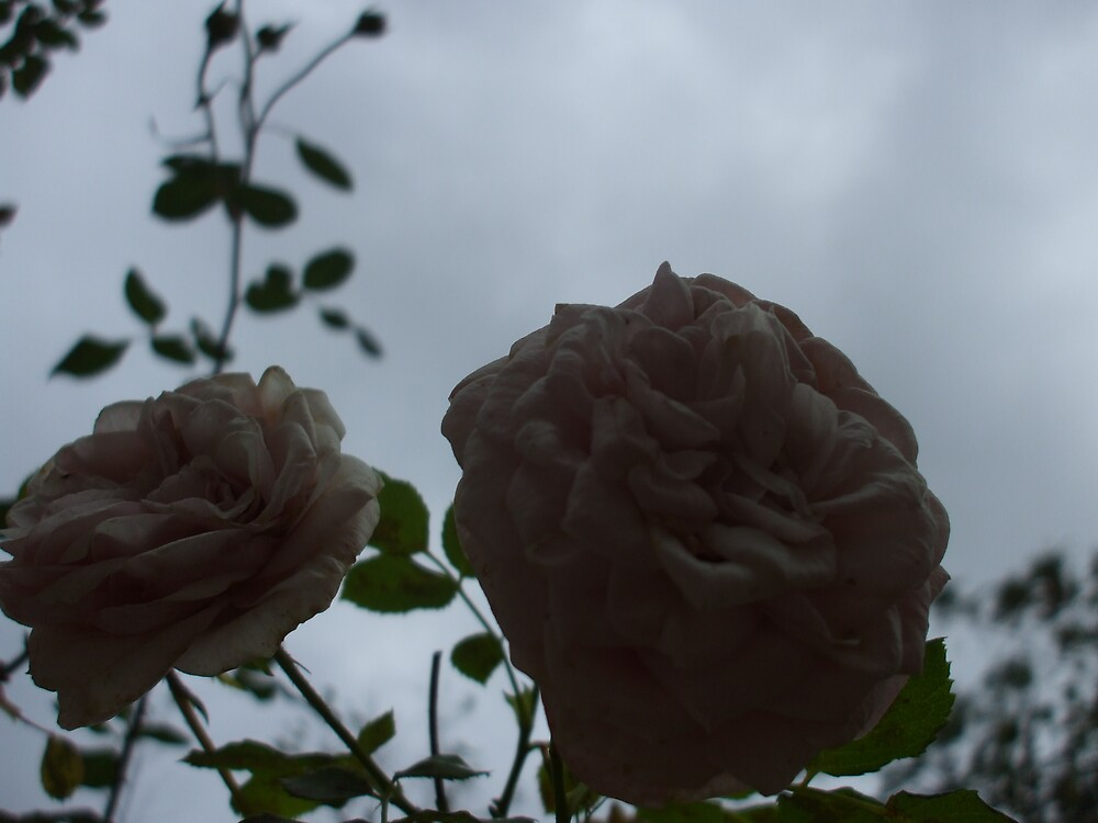 DUSK FELL ONCE UPON A ROSE by Dalzenia Sams