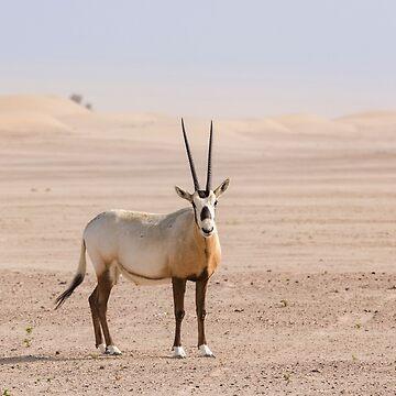 Arabian oryx by stedata