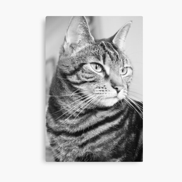 Tabby Cat in Black and White Canvas Print