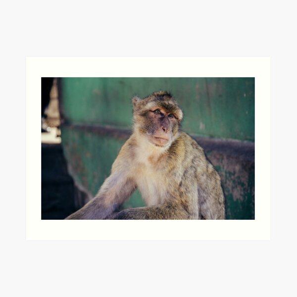 Gibraltar - Affenfelsen Art Print