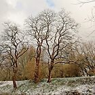 Curly winter trees by xophotography