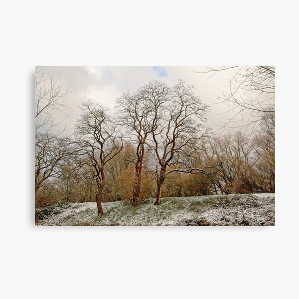 Curly winter trees Canvas Print