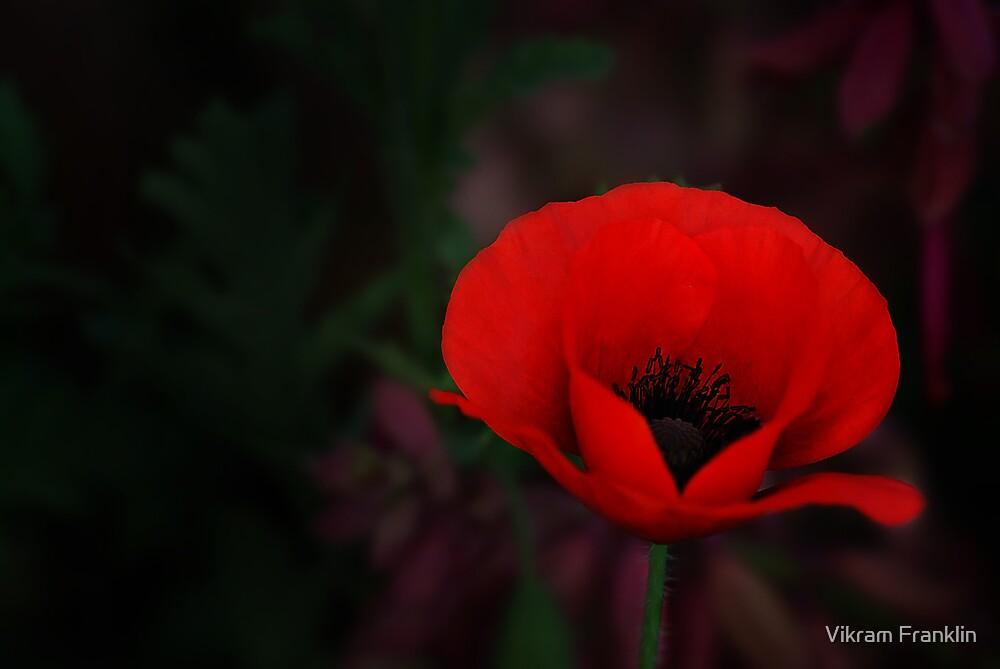 Opium by Vikram Franklin
