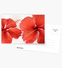 Red Hibiscus Postcards